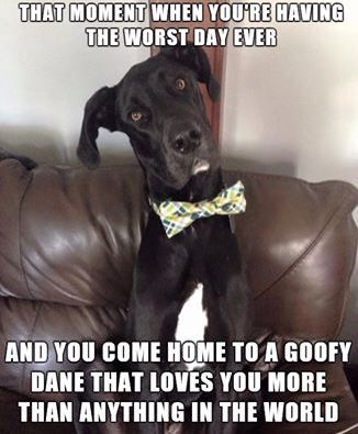 dog pics with captions Funny Dog Picture Ruined The Couch Excuse Nice Cute Caption Image Every Dog Has His Day