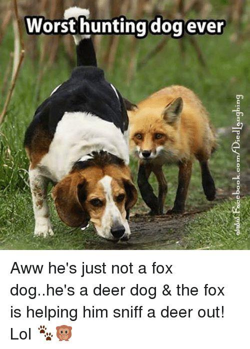 Aww Deer and Memes worst hunting dog ever Butupnolpata ui OD