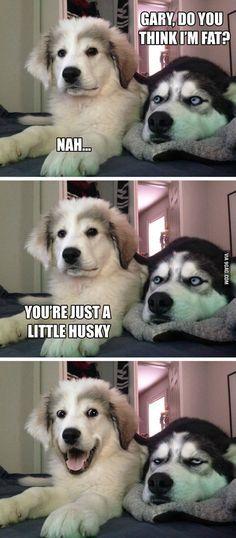 Pun puppy Funny Puppy MemesPuns