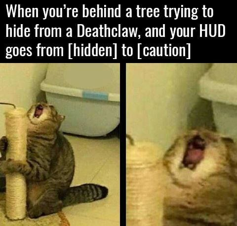 35 Funny Cat Memes To Make You Laugh