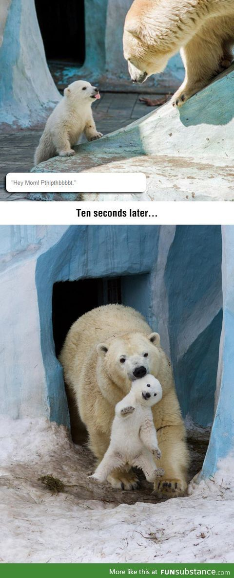 Disrespectful baby polar bear Cute Funny Animals Funny Cute Funny Animal Bear