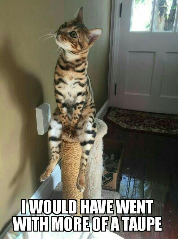 Funny Cats Funny Animals Cute Animals Cat Boarding Jelly Beans Funny Animal Softies Funny Kitties Gummi Bears