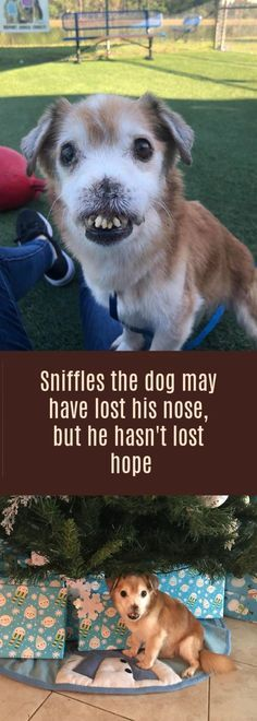 Sniffles the dog may have lost his nose but now he has a forever home