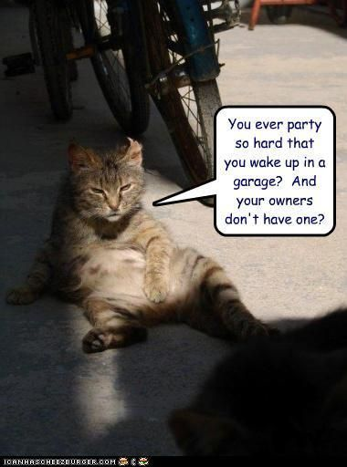 LOL Cats cats funny meme animals