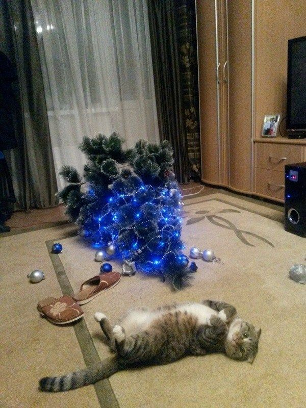 photo of cat who knocked down Christmas Tree