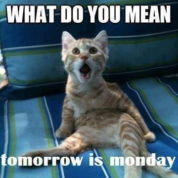 cat funny and monday image