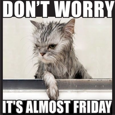 It s Almost Friday It s Almost Friday funny cat pictures quotes