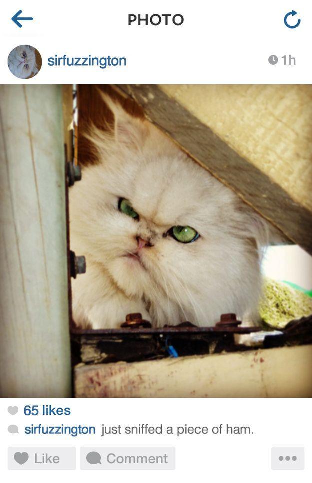 The stoner cat