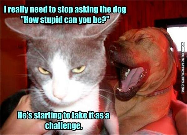 The cat keeps challenging the dog
