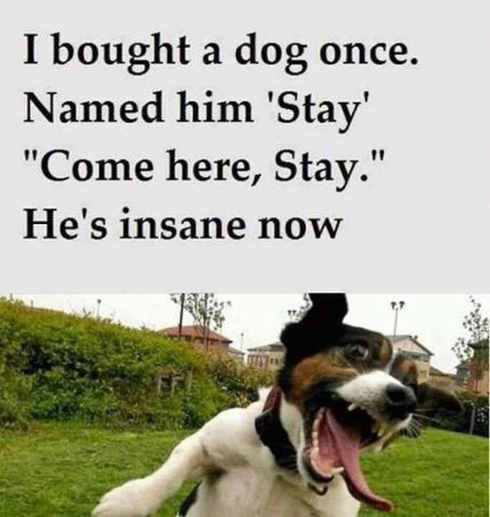 funny picture dog name pet stay