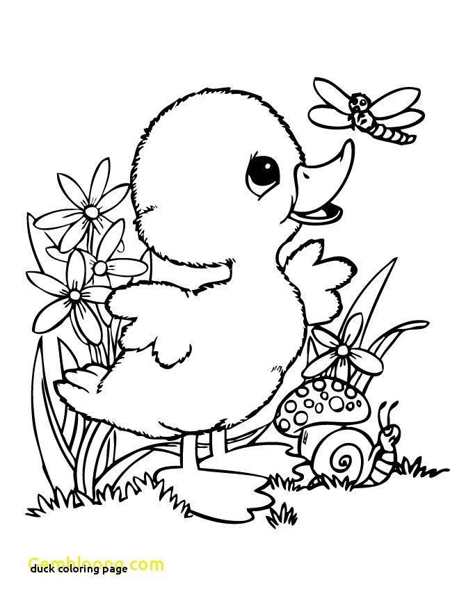 Cute Baby Animal Duck Coloring Page Duck I Pinimg 1200x 0d 53 58 0d D3cea35bcc D8ff1b