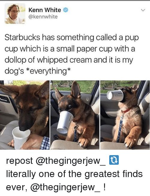 Dogs Memes and Starbucks Kenn White kenn white Starbucks has something called