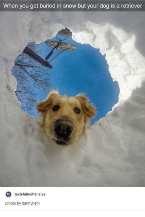 Dogs Funny and Snow When you buried in snow but your dog