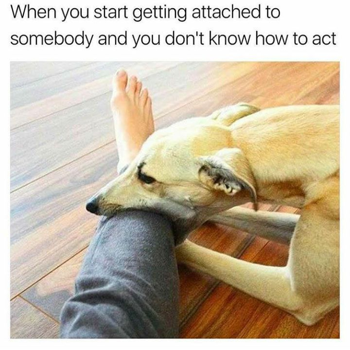 The Most Hilarious Animal Memes The Web 27