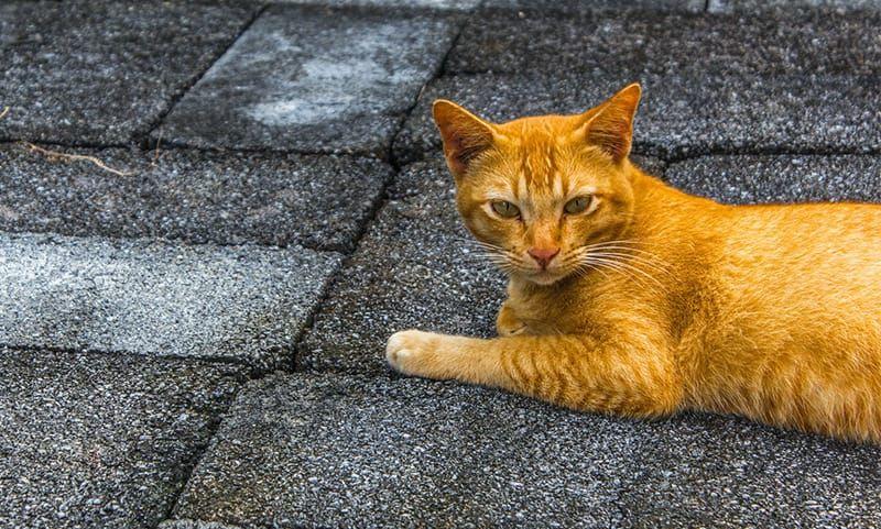 Orange Cat Names – 90 Colorful Ideas