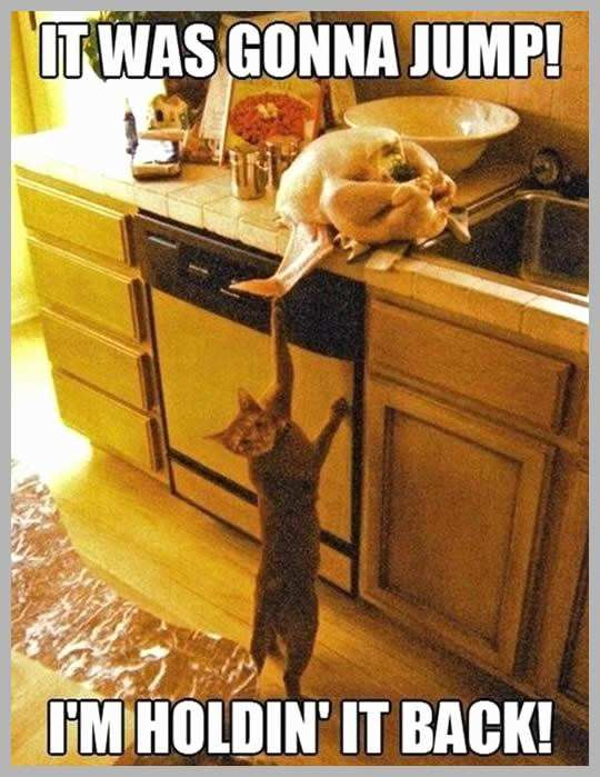 Funny Turkey Memes Inspirational 9 Things Cat Owners Experience Thanksgiving – Meowingtons Funny Turkey