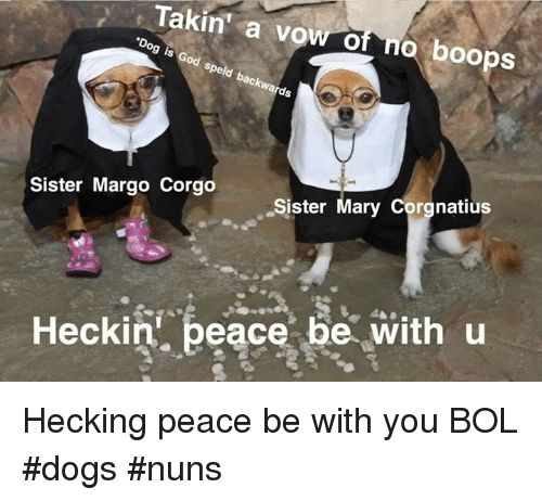 Dogs Memes and Peace Takin a vow of no boops od Spe