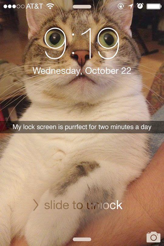 Get some Funny Cat s Tumblr super