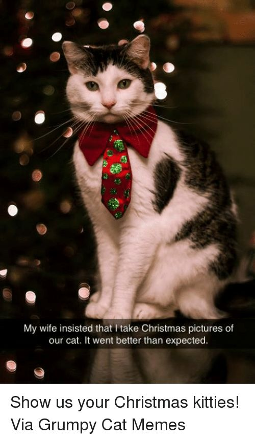 Kitties Memes and Grumpy Cat My wife insisted that l take Christmas pictures
