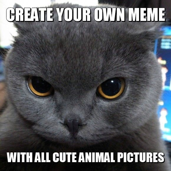 Create Your Own Meme with All Cute Animal