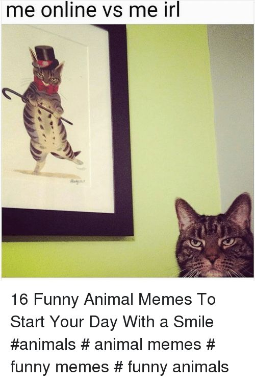 Animals Funny and Funny Animals me online vs me irl 16 Funny Animal