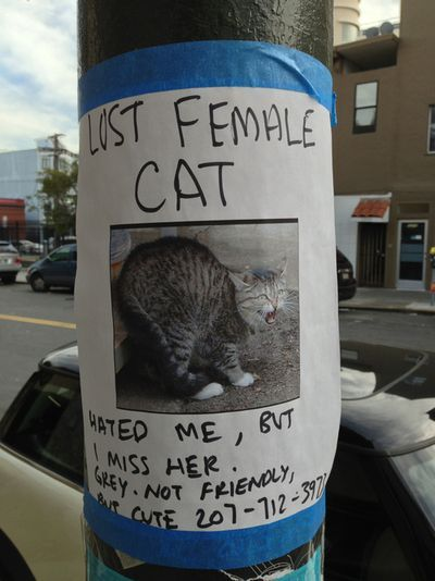 Take the Shocking Funny Animal Pictures Lost Cat