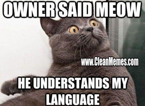 New Trending Popular Memes Clean Memes – The Best The