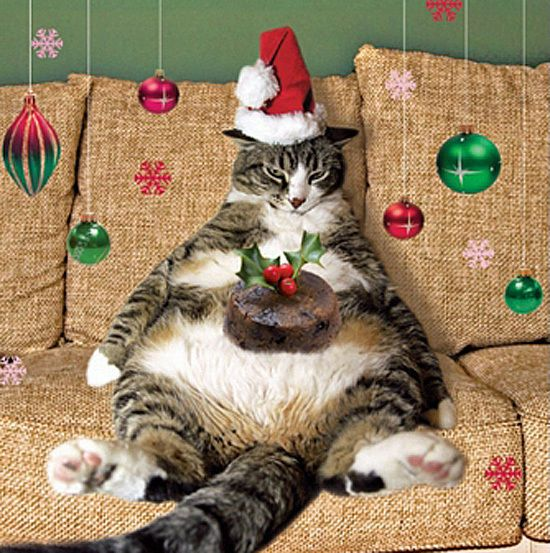 Pack of 5 Premium Charity Christmas Cards Cute Fat Cat Pudding Gloss Finish