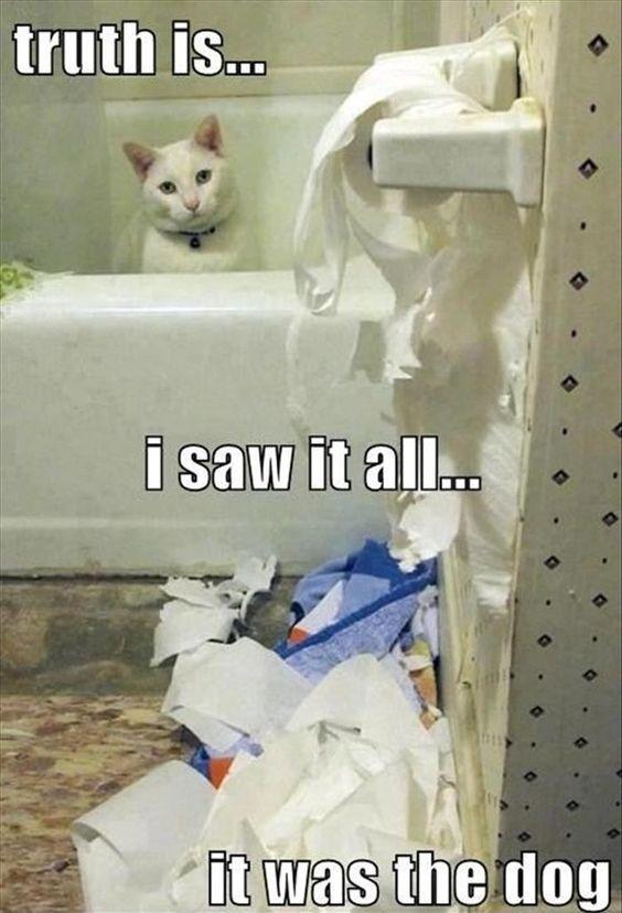 Funny cat memes funny… 0 · 0 · 0 Funny cat memes