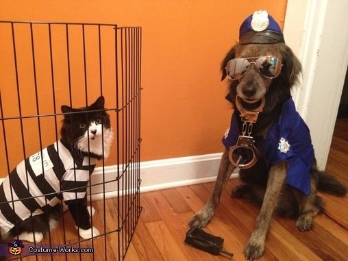 Cat Burglar And Police Dog s and for