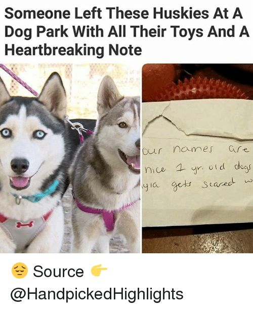 Memes Toys and Nice Someone Left These Huskies At A Dog Park With