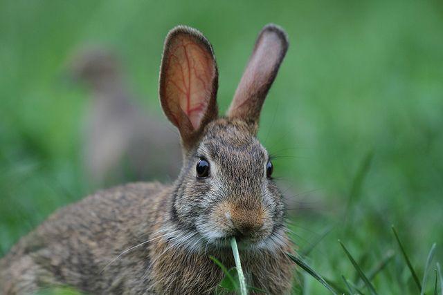 children s books peter rabbit