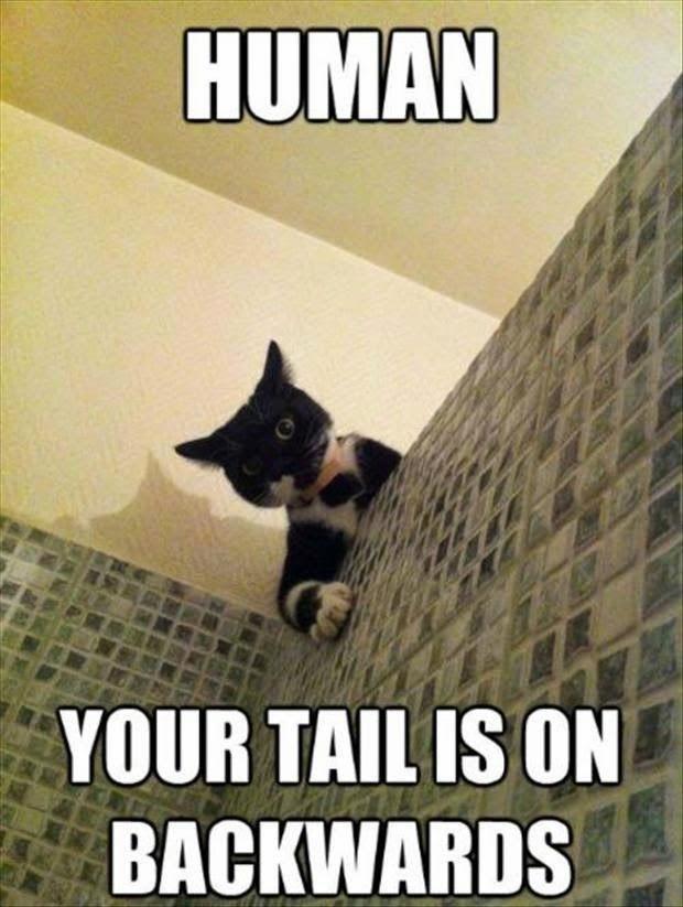 Cat Shower Human Backwards Tail Smile Instigators