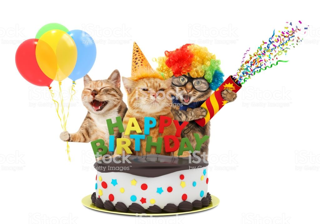 Funny cats with petard and birthday cake They are wearing festive clothes isolated on