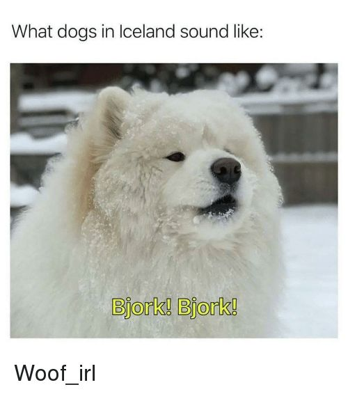 Dogs Iceland and Irl What dogs in Iceland sound like Bjork