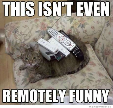Remotely funny cat