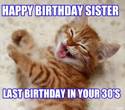Take the Unique Happy Birthday Cat Memes Funny