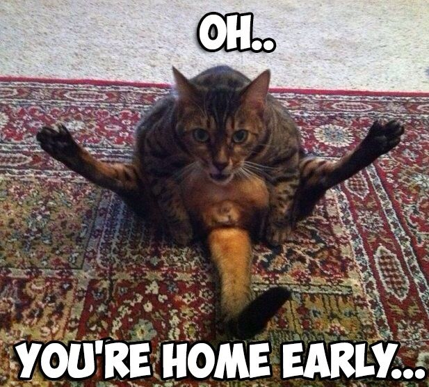 funny picture cat busted