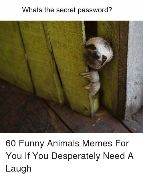 Animals Funny and Funny Animals Whats the secret password 60 Funny Animals