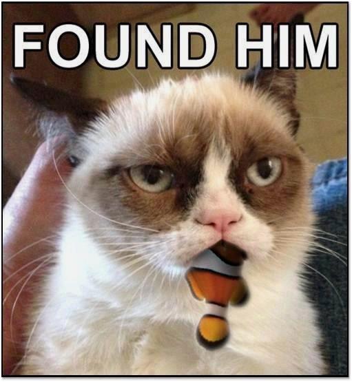 Post by urroner Sat Apr 20 2013 2 59 pm Funny grumpy cat