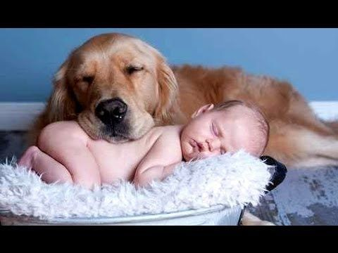 funny videos free Funny Dog Videos pilation