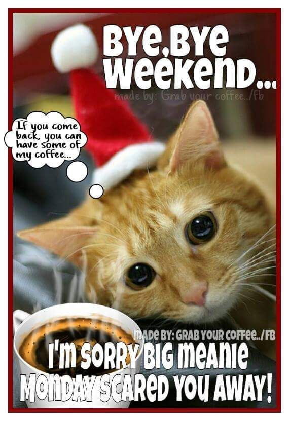 BYE BYE WEEKEND funny cat Monday quote