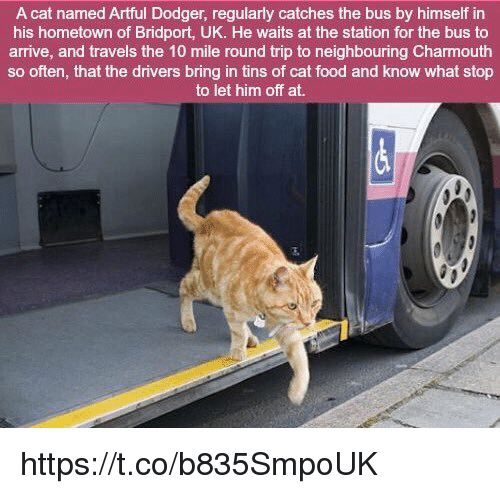 Dodgers Memes and 🤖 A cat named Artful Dodger regularly catches the