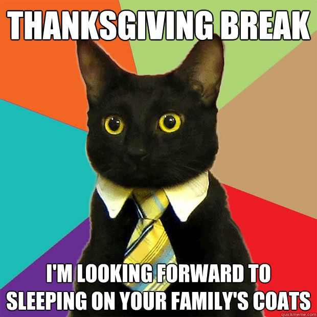 Thanksgiving Break Cat Meme