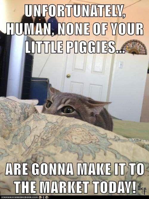 Yeah😂 Animal Funnies Animal Memes Animal Antics Cat Memes Funny Memes