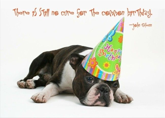 Funny Dog Birthday Cards Elegant A Happy Birthday Wish to Your Favorite Dog Lover This is