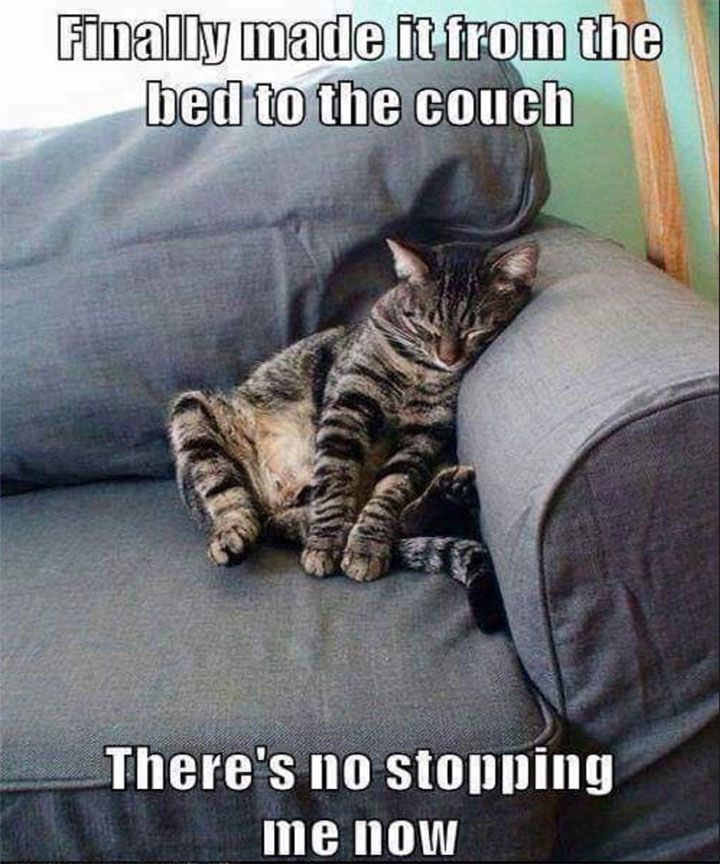 Funny Cat Memes That Will Keep You Laughing 41