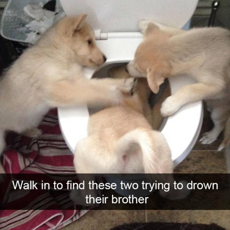 Behold The Funny Dogs Snapchat – 26 Pics