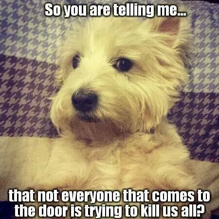 ef9fdb439cee44e160b0d94c46 Funny Westies Funny Pets Funny Dog s Funny Dog Sayings Dog