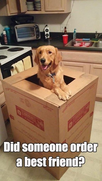 The best t a Golden Retriever friend Cute Dog Memes Cat And Dog Memes